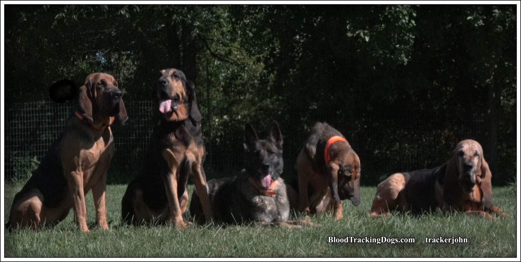 trackerjohn's dogs: Jesse-Jane, Hayley, Elle, Holly, and Jesse